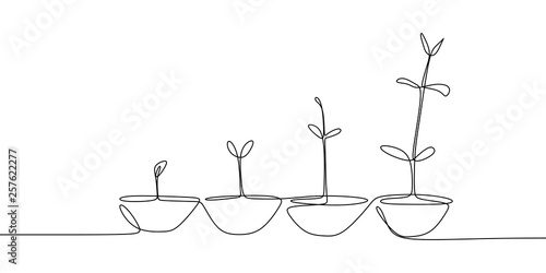Fotomural continuous line drawing of plant growth processes.
