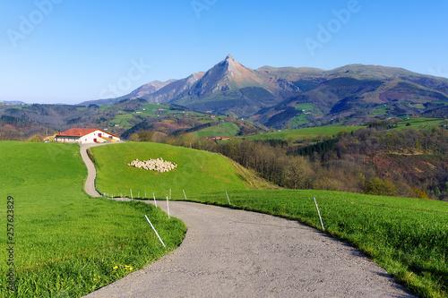 rural landscape of farm with sheep in Lazkaomendi in Gipuzkoa with Txindoki mountain