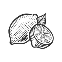 Lemon Citrus Fruit Sketch Engr...