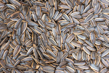 Heap Of Dried Melon Seeds Close-up In A Chinese Street Market In Chengdu