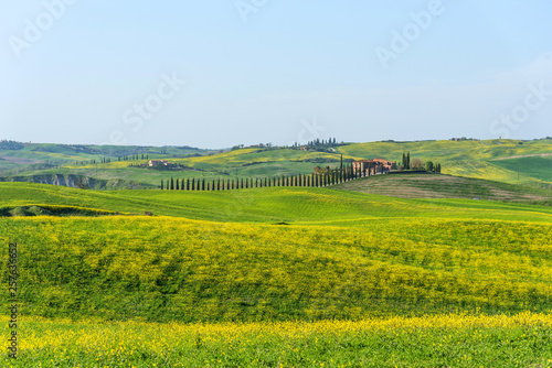 Foto op Aluminium Heuvel Beautiful farmland rural landscape, cypress trees and colorful spring flowers in Tuscany, Italy. Typical rural house.
