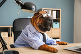 Fototapeta Zwierzęta - Cute funny dog dressed as businessman in office