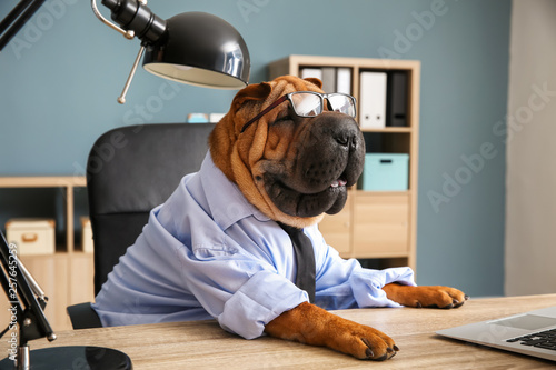 Fotografiet  Cute funny dog dressed as businessman in office