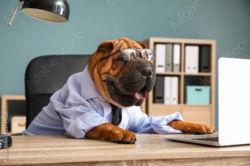 Obraz Cute funny dog dressed as businessman in office - fototapety do salonu