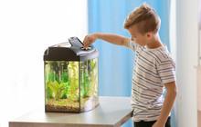 Cute Little Boy Feeding Fish In Aquarium