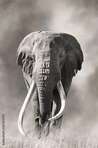 Giant tusked bull elephant in Amboseli, Kenya Wallpaper Mural
