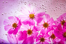 A Beautiful Floral Background ...