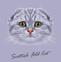 Scottish Fold Cat Animal Cute ...
