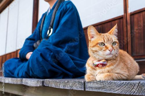 Fotografie, Obraz 猫とお坊さん