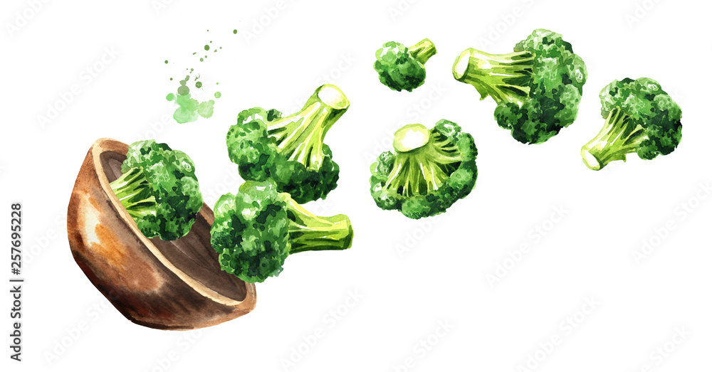 Fototapety, obrazy: Bowl with fresh broccoli. Hand drawn horizontal watercolor illustration, isolated on white background