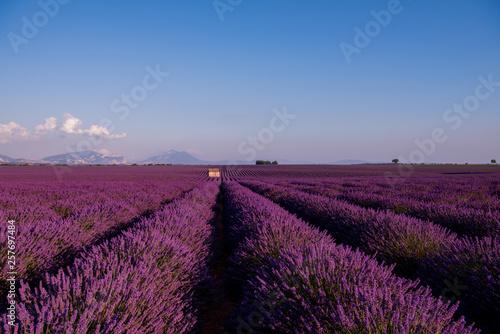 Fototapeta stone house at lavender field obraz na płótnie