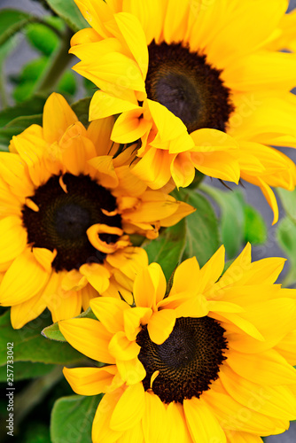 In de dag Zonnebloem Bouquet of flowering sunflowers