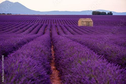 Lavande stone house at lavender field