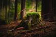 canvas print picture - Baumstumpf im Wald