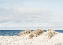 Dune Grass On A Beach