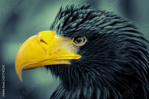 Cadres-photo bureau Aigle portrait of an eagle