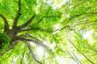 Frühling Wald Sonne und Bäume