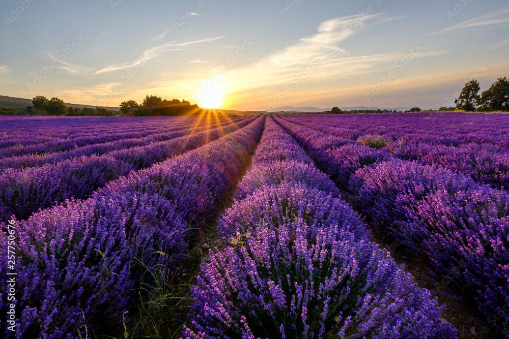 Fototapeta Champ de lavande en Provence, le Mont Ventoux en arrière-plan. Coucher de soleil. - obraz na płótnie
