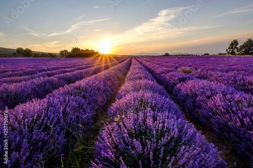 Fototapeta Champ de lavande en Provence, le Mont Ventoux en arrière-plan. Coucher de soleil. obraz na płótnie