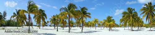 Poster Palmier Playa Sirena Beach Tourist Resort and Palm Trees Wide Panoramic Landscape on Cayo Largo Tropical Island in Caribbean Sea, Cuban Coast