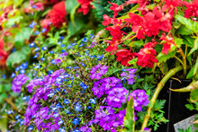Many Colorful Tiny Purple And ...