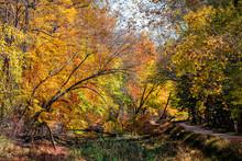 Great Falls Yellow Orange Autu...