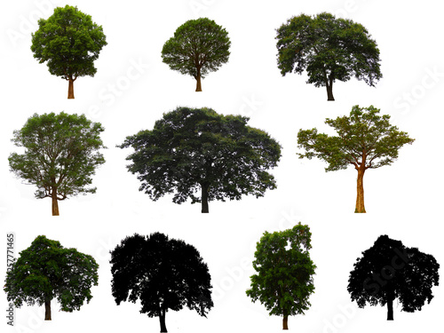 Fotografia, Obraz  Collection of tree isolated on white background