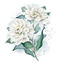 Watercolor Flowers. Dahlia Bouquet. White Dahlia. Floral Illustration. Leaves And Buds. Botanic Composition For Wedding Or Greeting Cards Or Other Projects