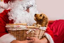 Santa With A Dog