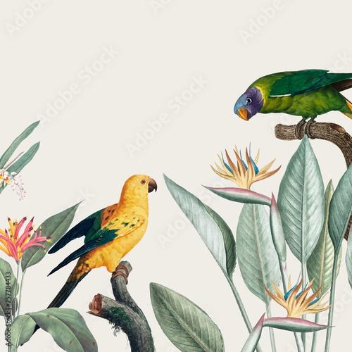 Plakaty botaniczne macaw-tropical-illustration