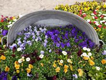カラフルな花壇の中にあるバケツ