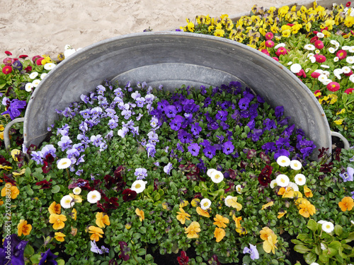 Valokuva  カラフルな花壇の中にあるバケツ