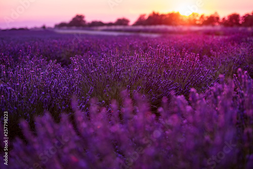 Fototapety, obrazy: colorful sunset at lavender field