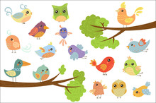 Cute Bird Characters Set, Cute Colorful Cartoon Birds Flying, Singing, Sitting On The Branch Vector Illustrations On A White Background