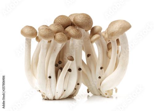 brown beech mushroom on white background Fototapet