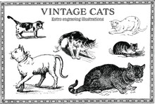 Set Of Funny Retro Engraving Cats Illustrations