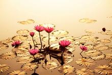 Golden Leaves Lotus