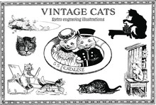 Set Of Vintage Engraving Cats Illustrations