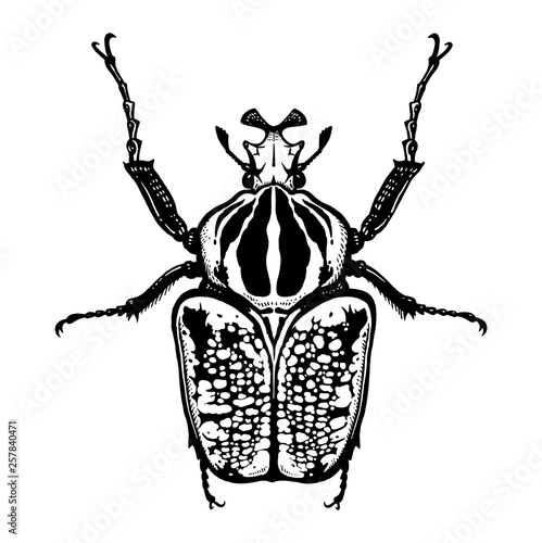 Stampa su Tela Insect beetle isolated on white background