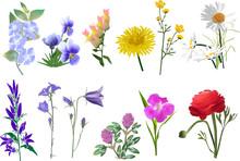 Set Of Twelve Wildflowers Coll...