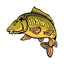 Carp Fish Bald Without Scales Color Clipart