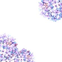 Purple Watercolor Hydrangea Flower