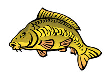 Carp Fish Bald Without Scales Color Icon