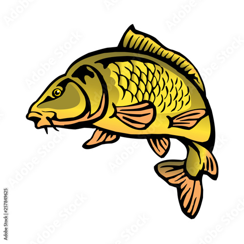 carp fish with fish scales big fish color clipart - Buy this