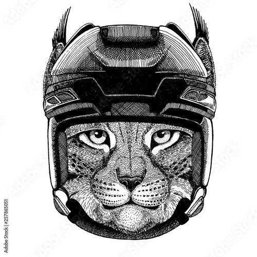 Wild cat, lynx, bobcat, trot, animal wearing hockey helmet Tapéta, Fotótapéta