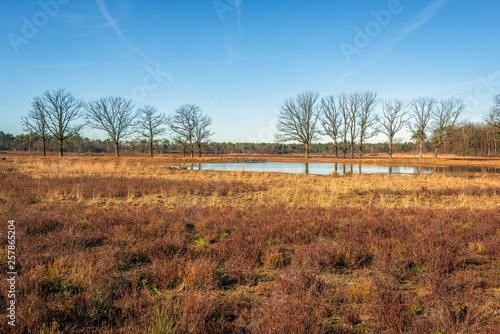 Fotografia, Obraz  Heather field in winter season