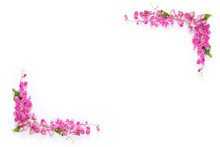 Pink Floral Flower Border Frame As Corner On White Background With Copy Space
