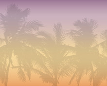 Pattern Or Background With Realistic Silhouette Of Tree Tops, Tropical Palm Trees, With Morning Orange-pink Sky And With Space For Text, Vector