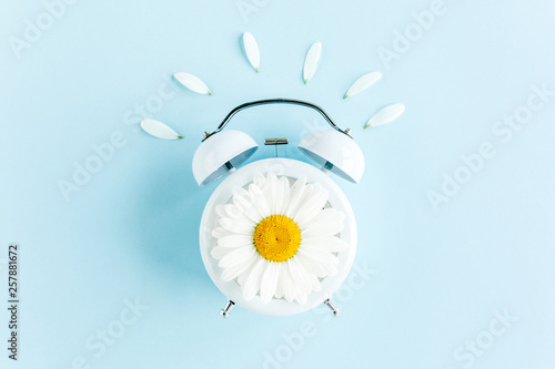 Marguerites Composition-Summer time from chamomile flower and clock on blue background. Flat lay, top view