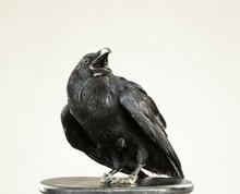 Beautiful Black Raven Sits On ...